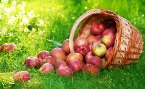 Fruits-apple-hd-wallpapers
