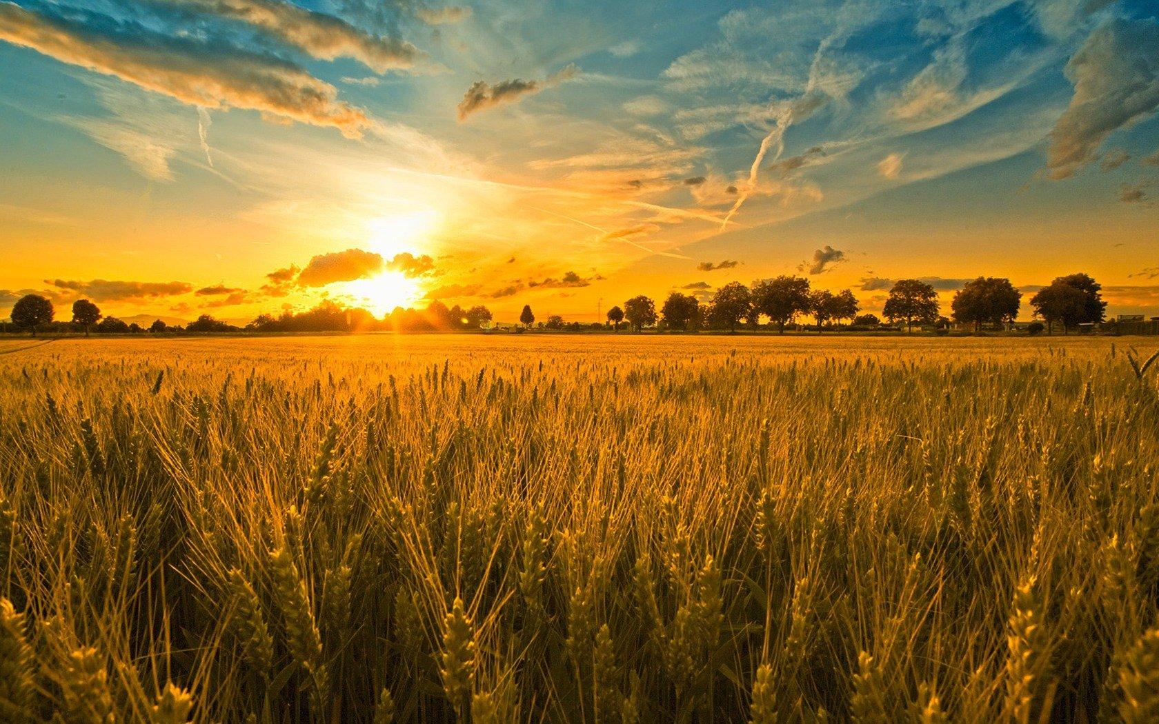 Harvest Celebration John 6: 25-35